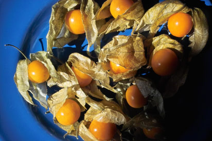 Physalis1 in